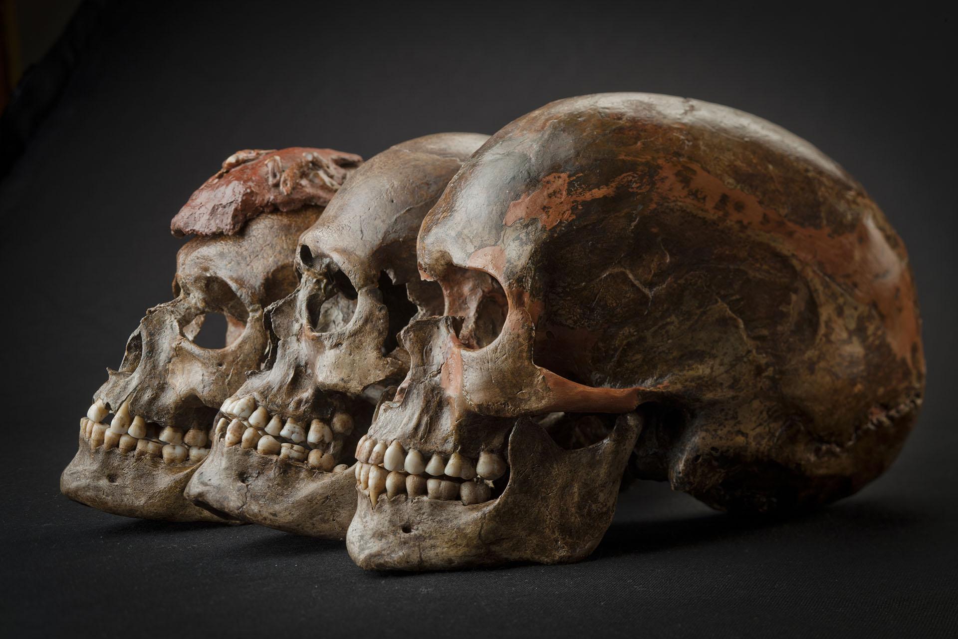 Skládáme mozaiku poznání oprvních zástupcích anatomicky moderního člověka vEvropě